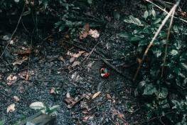 Manuel Antonio - Costa Rica-11