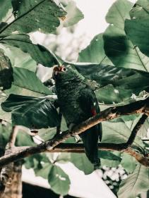 Santa Teresa - Costa Rica-32